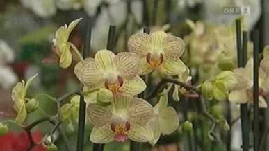 2009 ORF IT 1303 Orchideen.flv
